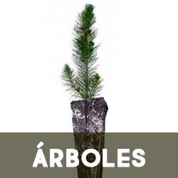 Arboles y plantas micorrizados
