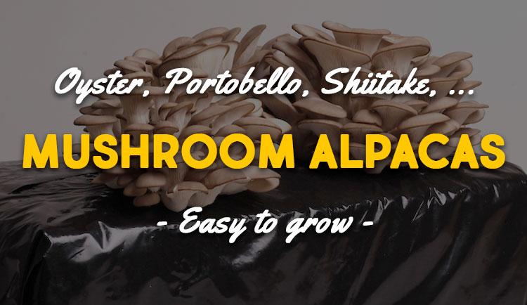 mushroom alpacas