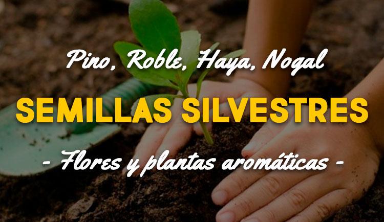 semillas y plantas silvestres