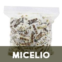 micelio, esporas, inoculo