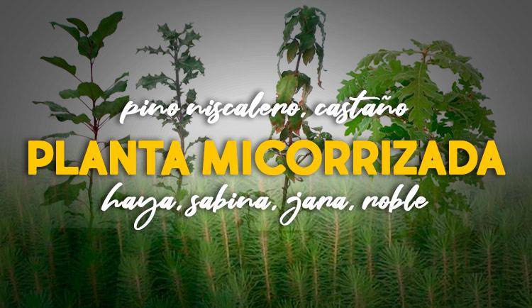 arboles micorrizados