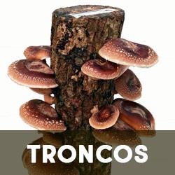 troncos productores de setas
